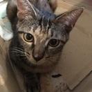 生後半年の子猫と1歳、2〜3歳の里親さん募集