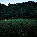 7/30 夕暮れお散歩&ホタル狩り