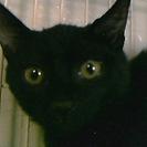 201709 黒仔猫