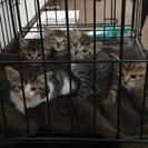 1ヵ月くらいの姉妹ネコ、助けてください!