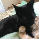10ヶ月の黒猫ちゃん。可愛がってあげてください。