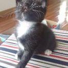 生後一ヶ月の野良猫※かわいい