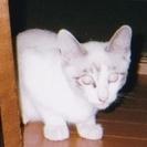 ふわふわでキレイな毛皮の可愛い仔猫の里親さんを募集しています。