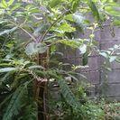 草刈り 刈払機作業 チェーンソー 手作業 便利屋1時間3000円になります。 - 東大阪市