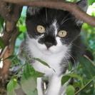猫ちゃんの里親募集。