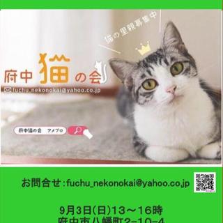 府中猫の譲渡会、開催☆9月3日(日)13~16時@府中☆【府中猫の会】