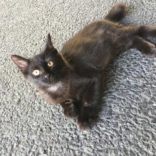 4ヶ月くらい、ふわふわの黒猫