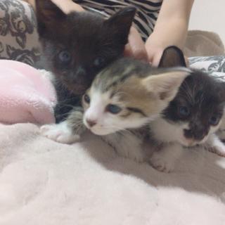 先月7月生まれの子猫3匹です