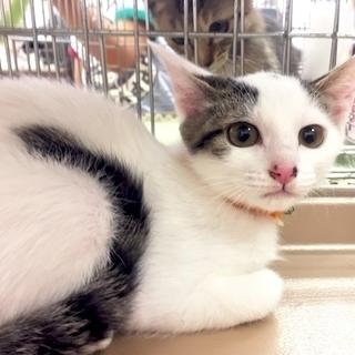 9月24日(日) 猫の譲渡会 名古屋市守山区 もりやま犬と猫の病院...
