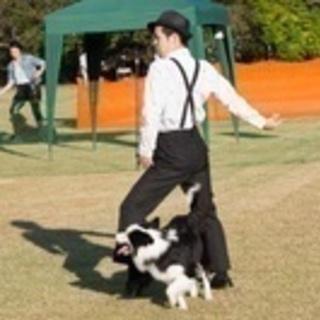 愛犬と習い事! ドッグダンス始めませんか?