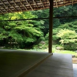 京都一人旅。どなたか一緒に回りませんか?