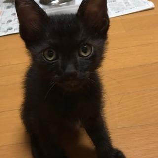 黒猫 オス 里親募集です