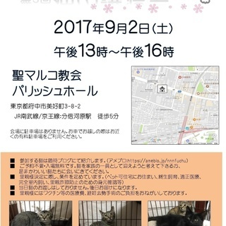猫の譲渡会 (合同)9月2日(土)