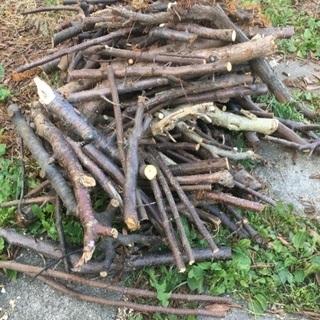 薪に使える枝