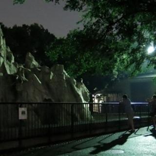 8月26日(8/26)  夏限定!夜の動物園へ!福岡動物園ナイトウ...