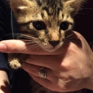 現在交渉中です  6月8日生まれの子猫
