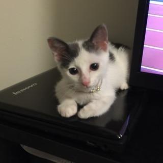 美人仔猫ちゃんです