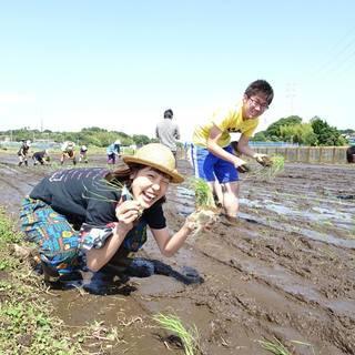 稲刈りしましょう!~大竹農園×熊澤酒造が送る~【すべて茅ヶ崎産!日...