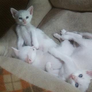 子猫、産みました