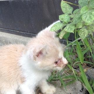 小さな子猫4匹(メス) 寄生虫とノミの駆除済み
