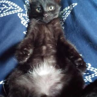 黒猫4カ月オス 人慣れしてます