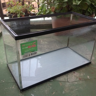 大き目のガラス水槽 2