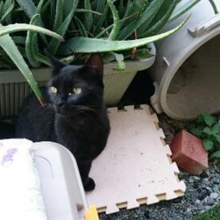 見所ある黒猫です。