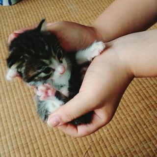 子猫 生後2週間 推定オス