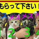 生後1ヶ月~2ヶ月の猫の赤ちゃんです。 長浜市近隣の方で里親募集です。
