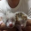 猫の赤ちゃん里親募集