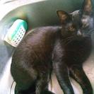 黒猫差し上げます