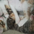生後三ヶ月くらいの子猫の家族募集です。