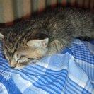 7月産まれの子猫 至急