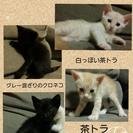 オス黒猫ちゃん2匹