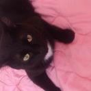 黒猫<オス>