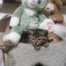 かわいい子猫の里親募集