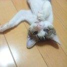 ハンディをもった子猫(右目が失明)