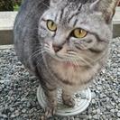 5歳の大人しい猫です。