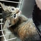 かわいい栗毛の子猫