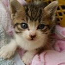 1ヶ月ぐらいの子猫の里親を募集中です