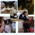 ノラ猫の親子の里親募集ฅ'ω'ฅ