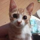 猫、3ヶ月