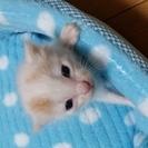 7/16保護しました!生後2週間くらいのオス猫