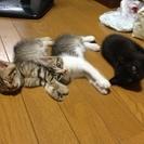 嵐の夜に保護した4兄妹です