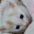 可愛い顔してますがオス猫です!