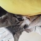 ☆沖縄県で子猫を飼える方☆