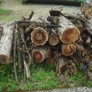 薪 どんぐりの木