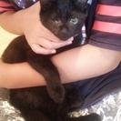 人が大好きな、黒ネコちゃんです。