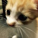 2ヵ月半の子猫です