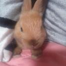 生後4ヶ月の小ウサギ